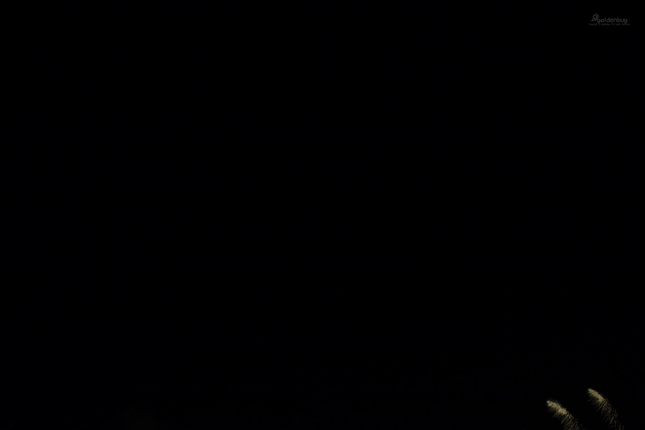여의도 불꽃축제.2018.10.06.5DsR-1999.한국팀@한강 이수지구.2160pxL.jpg